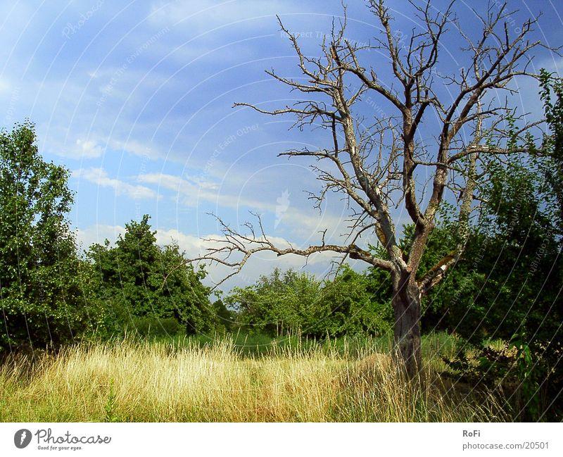 Die Vergänglichkeit des Lebens Baum Sonne Sommer Wolken Gras Sträucher eigenwillig