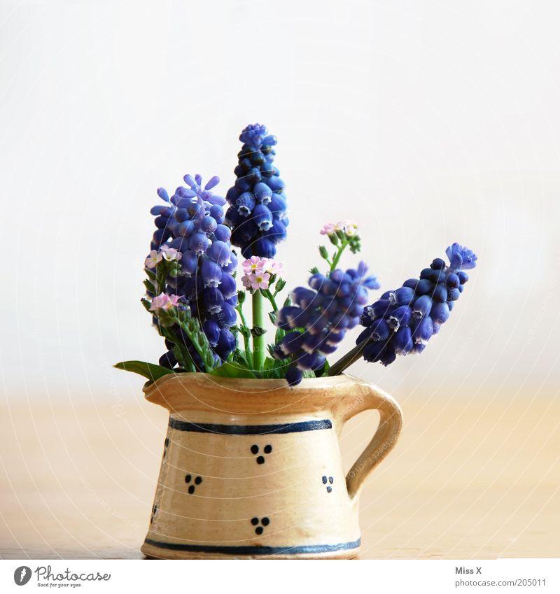 Kleiner Strauß Blume Blüte Frühling klein Dekoration & Verzierung Blühend Duft Blumenstrauß Nostalgie Vase Kannen Frühlingsgefühle Dinge Krug Vergißmeinnicht Hyazinthe