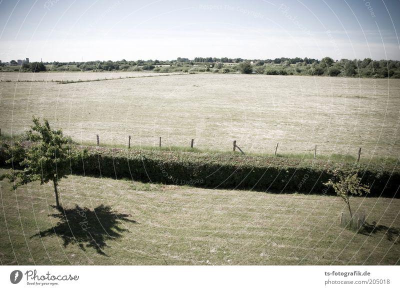 Heckensteher I Umwelt Natur Landschaft Pflanze Horizont Schönes Wetter Wärme Dürre Baum Gras Grünpflanze Nutzpflanze Obstbaum Streuobstwiese abgemäht Rasen