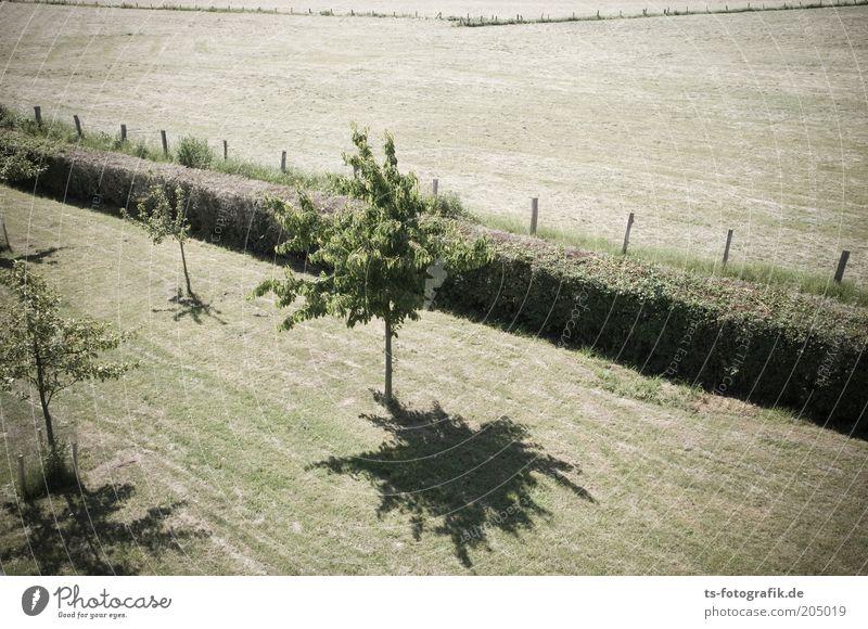 Heckensteher II grün Baum Pflanze Sommer Wiese Umwelt Gras Wärme Linie Park Wetter Feld Wachstum Perspektive trist trocken