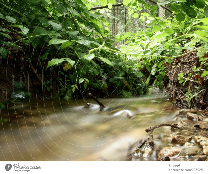Unten am Fluss III Wasser Umwelt Natur Pflanze Sonnenlicht Sträucher Wald Flussufer Bach wild braun grün Farbfoto mehrfarbig Außenaufnahme Textfreiraum unten