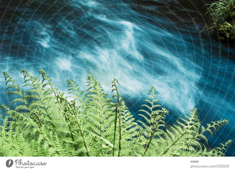Wasserrausch Umwelt Natur Landschaft Pflanze Klima Sträucher Farn Grünpflanze Wildpflanze Flussufer Bach kalt nachhaltig nass natürlich blau grün Idylle