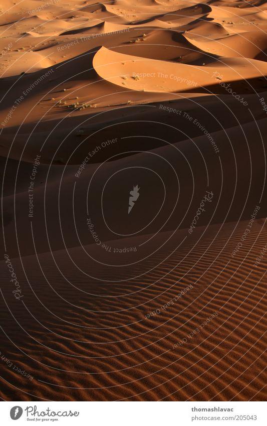 Natur Ferien & Urlaub & Reisen Umwelt Landschaft Wärme Sand Ausflug Tourismus Wüste Schönes Wetter Düne Sonnenuntergang Sahara Marokko