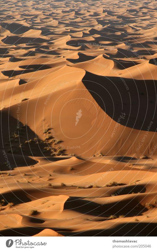 Natur Ferien & Urlaub & Reisen Umwelt Landschaft Sand Wüste Schönes Wetter Düne Sahara Marokko Afrika