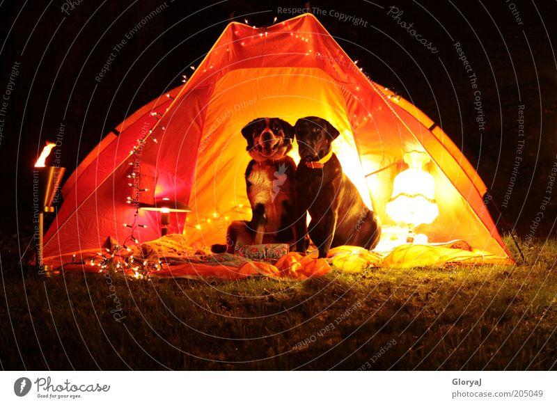 Lichtdurchflutetenacht Haustier Hund 2 Tier Tierpaar beobachten sitzen lustig gelb rot schwarz Stimmung Vertrauen loyal Tierliebe Romantik Farbfoto
