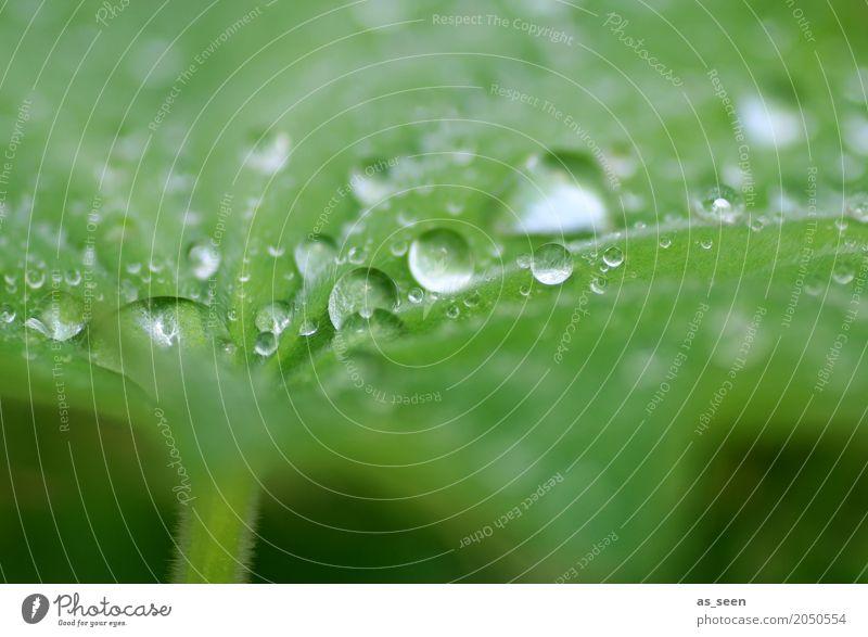 Glasperlenspiel elegant Stil Design exotisch schön Körperpflege Wellness harmonisch Sinnesorgane Erholung Meditation Natur Pflanze Wasser Wassertropfen Frühling