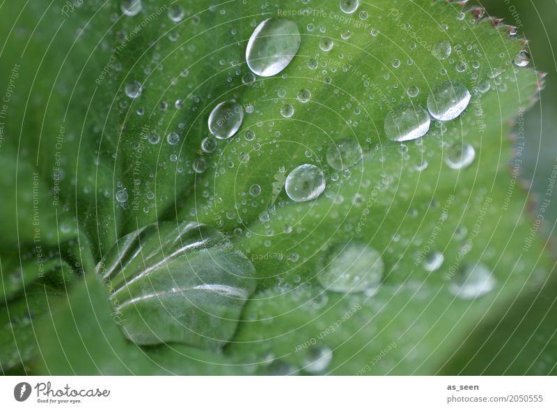 Fresh! Lifestyle Stil Wellness Leben harmonisch Sinnesorgane Meditation Spa Garten Natur Pflanze Wasser Wassertropfen Frühling Sommer Klima Regen Blatt berühren