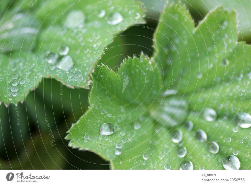 Tropfen Lifestyle schön Körperpflege Wellness harmonisch Sinnesorgane Meditation Spa Natur Pflanze Wasser Wassertropfen Frühling Sommer Blatt Grünpflanze Garten