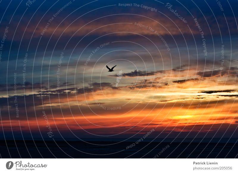 seagull in the evening sky Umwelt Natur Landschaft Tier Urelemente Erde Luft Wasser Himmel Wolken Sonnenaufgang Sonnenuntergang Sommer Wetter Schönes Wetter