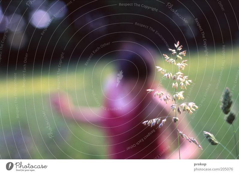 Auf der Wiese Frau Mensch Natur schön Pflanze Sommer Erwachsene Erholung feminin Umwelt Landschaft Gras Wärme Tanzen Freizeit & Hobby