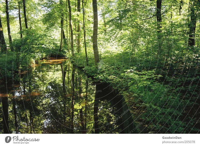 wo lang? da lang! VI Umwelt Natur Erde Wasser Wetter Schönes Wetter Baum Park Bach Blick dunkel fantastisch schön Wärme Stimmung Farbfoto Außenaufnahme