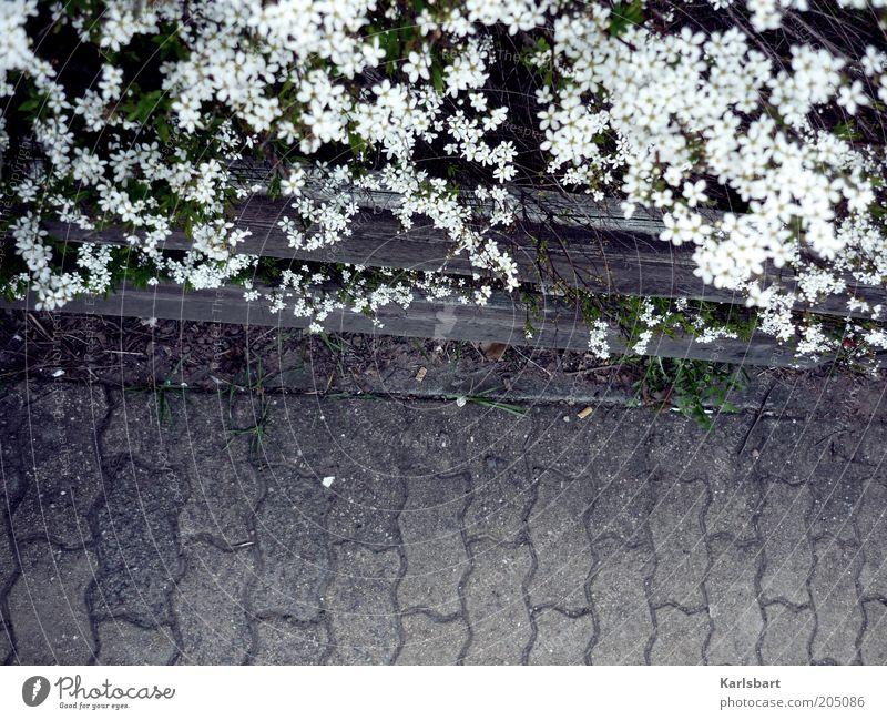 barriere. freiheit. Natur weiß Pflanze Sommer Blume Blüte grau Wege & Pfade Umwelt Stein Sicherheit Sträucher Grenze Bürgersteig Verkehrswege Zaun