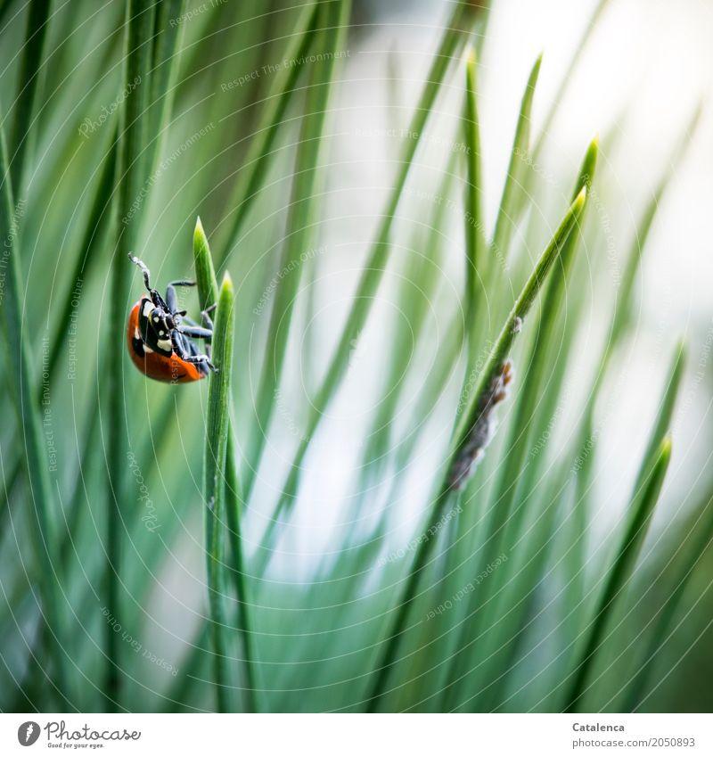 Speisekammer Natur Pflanze Sommer grün weiß Baum Tier Wald schwarz Umwelt Leben grau orange Park ästhetisch beobachten