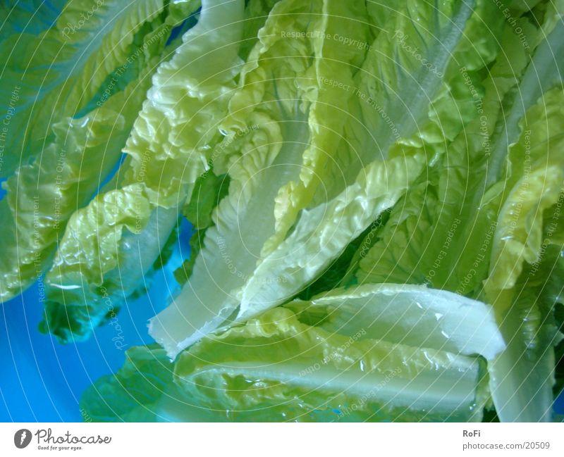 Salat im Wasserbad grün blau Ernährung Gesundheit Gemüse