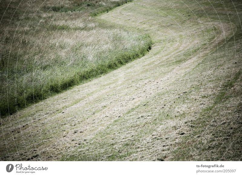 rasierte S-Kurve Umwelt Natur Landschaft Pflanze Sommer Wärme Gras Grünpflanze mähen Rasen Heu Heuernte Wiese Feld Deich Buchstaben heiß natürlich rund trocken