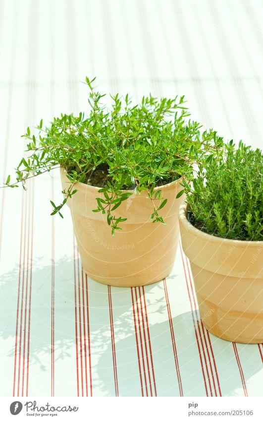 herb alive grün hell Lebensmittel frisch Ernährung Dekoration & Verzierung Streifen Kräuter & Gewürze Bioprodukte Blumentopf Tischwäsche Vegetarische Ernährung