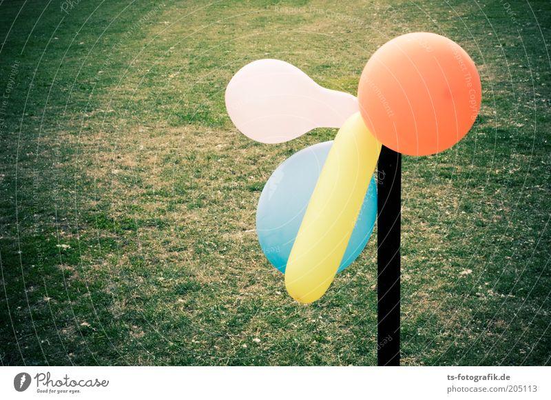 Was gucks Du? Gras Luftballon Stab Pfosten rund blau gelb grün rosa orange mehrfarbig Farbfoto Außenaufnahme Detailaufnahme Menschenleer Textfreiraum links