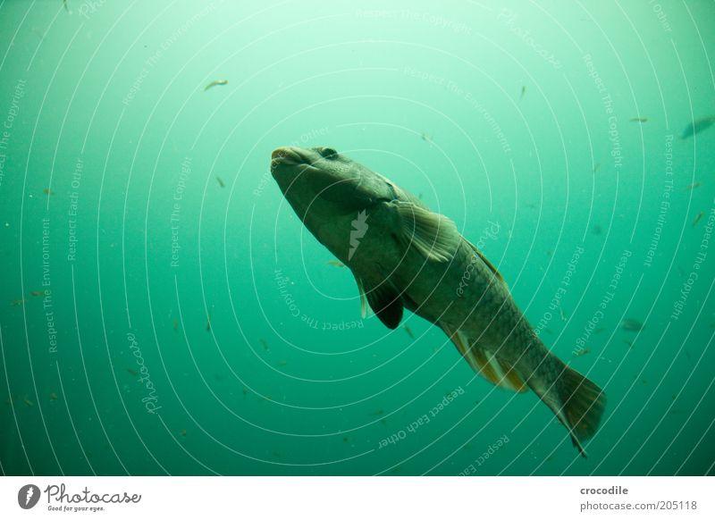 New Zealand 100 Natur Wasser schön Tier kalt Bewegung Umwelt Fisch ästhetisch Coolness einzigartig wild außergewöhnlich Gelassenheit Wildtier