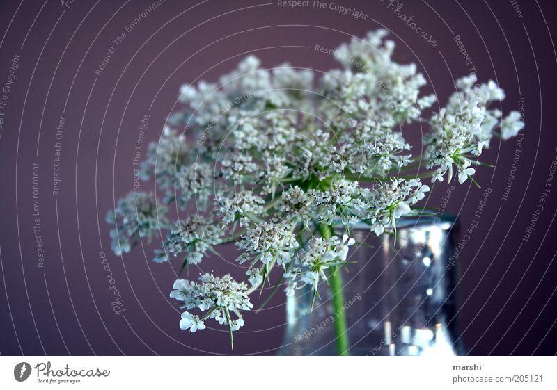 **** Natur Pflanze Frühling Sommer violett weiß Vase Dekoration & Verzierung Unschärfe Blüte Farbfoto Holunderblüte Blumenvase Nahaufnahme Hintergrund neutral