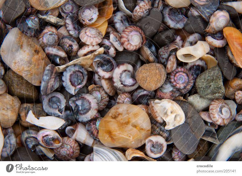 New Zealand 101 schön Meer Strand Stein Küste Umwelt Insel kaputt einzigartig Wildtier Muschel Umweltverschmutzung Makroaufnahme Souvenir Neuseeland Tier