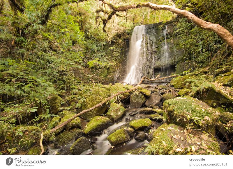 New Zealand 112 Natur Wasser Baum Pflanze Umwelt ästhetisch Fluss Romantik außergewöhnlich Urwald Moos Bach Wasserfall Landschaftsformen Neuseeland Farn
