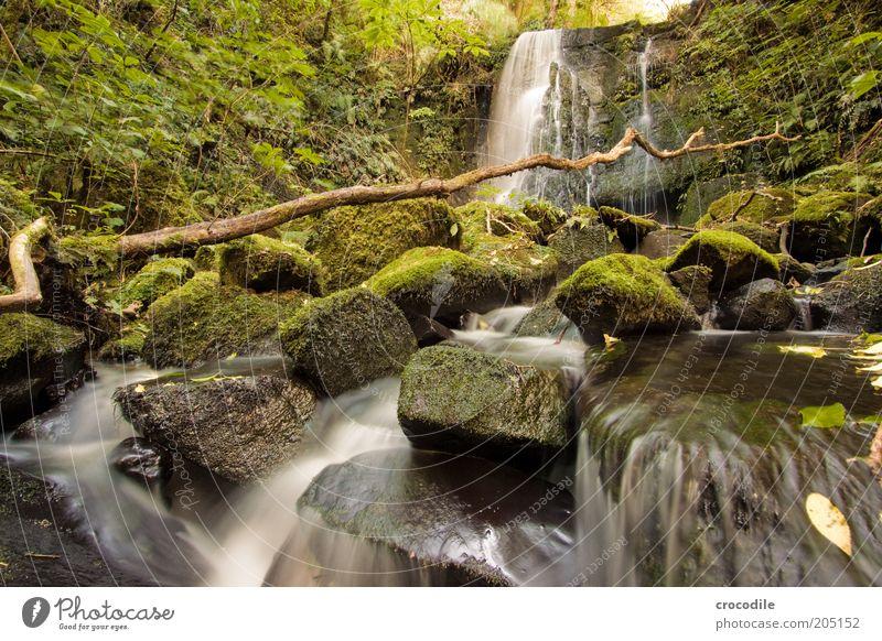 New Zealand 111 Umwelt Natur Wasser Pflanze Moos Wildpflanze Urwald Bach Fluss Wasserfall ästhetisch außergewöhnlich Romantik Farbfoto Gedeckte Farben