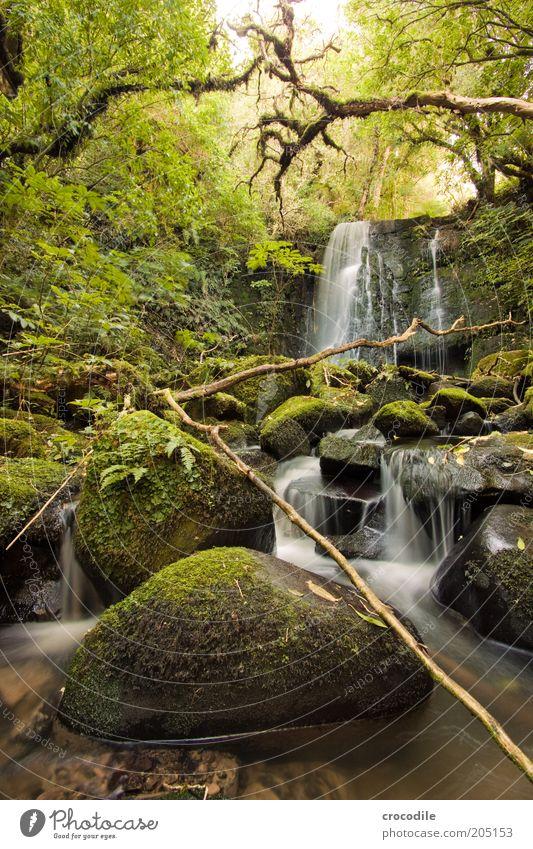 New Zealand 110 Umwelt Natur Wasser Pflanze Baum Moos Farn Echte Farne Wildpflanze Urwald Bach Fluss Wasserfall ästhetisch außergewöhnlich Romantik Farbfoto