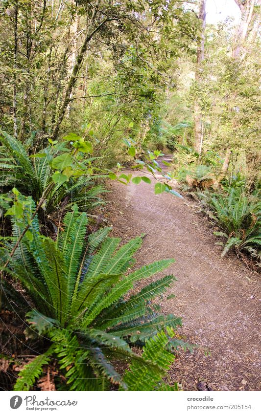 New Zealand 109 Natur Baum Pflanze Wege & Pfade Umwelt ästhetisch außergewöhnlich Urwald Farn Neuseeland Naturschutzgebiet Echte Farne Wildpflanze