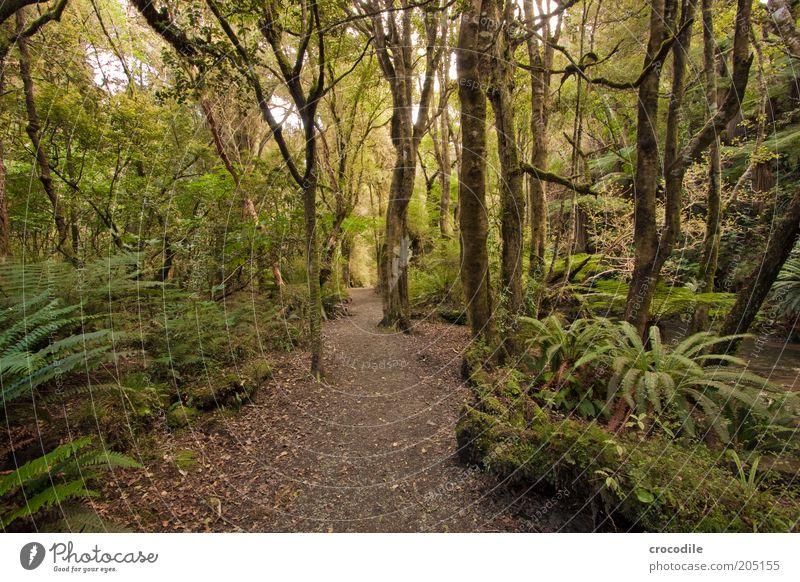 New Zealand 108 Natur Baum Pflanze Wege & Pfade Umwelt ästhetisch Hoffnung außergewöhnlich Urwald Moos Wald Farn Neuseeland Naturschutzgebiet Echte Farne