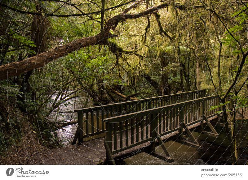 New Zealand 107 Natur Wasser Baum Pflanze Wege & Pfade Umwelt Brücke ästhetisch Fluss Romantik außergewöhnlich Urwald Fußweg Moos Bach Farn