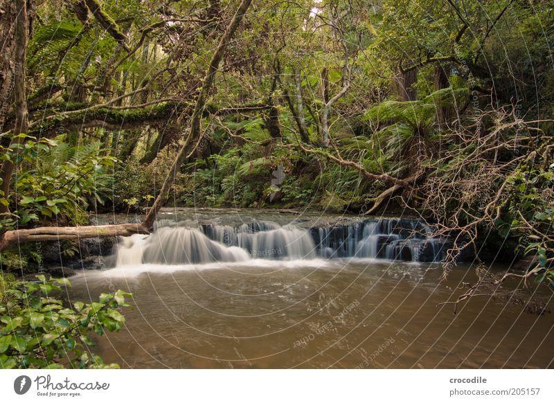 New Zealand 105 Umwelt Natur Wasser Pflanze Baum Moos Farn Echte Farne Wildpflanze Urwald Bach Fluss Wasserfall ästhetisch außergewöhnlich Farbfoto