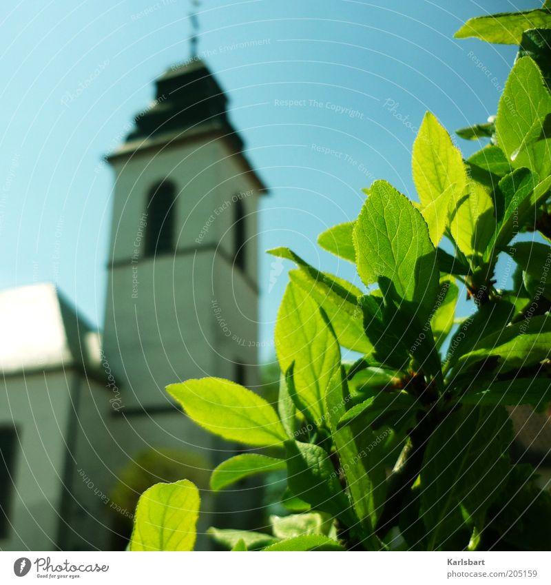 glaube. und hoffnung. ruhig Sommer Umwelt Himmel Frühling Pflanze Sträucher Blatt Kirche Bauwerk Architektur Religion & Glaube Barock Blattgrün grünen