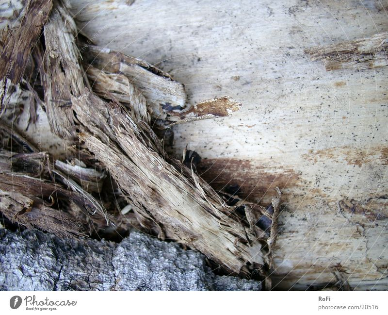 Baumstamm Baumrinde Herbst Holz
