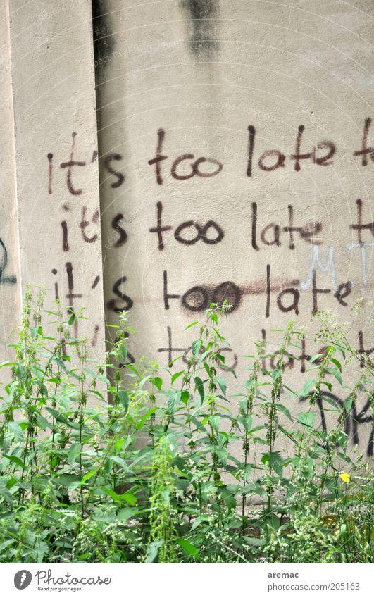 Alles zu spät Pflanze Wand Mauer Stimmung Beton Zeit Schriftzeichen Zeichen Verzweiflung Frustration Hoffnungslosigkeit Enttäuschung Grünpflanze resignieren
