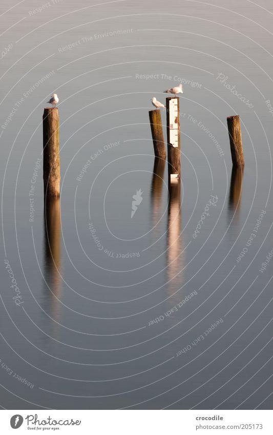New Zealand 122 Natur Wasser kalt See Landschaft Zufriedenheit warten sitzen ästhetisch Tiergruppe beobachten Wildtier Möwe hocken Vogel Holzpfahl