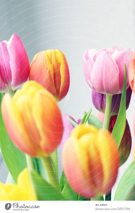 Blumenstrauss Lifestyle Wellness Leben harmonisch Sinnesorgane Erholung Dekoration & Verzierung Ostern Geburtstag Umwelt Natur Frühling Sommer Pflanze Tulpe