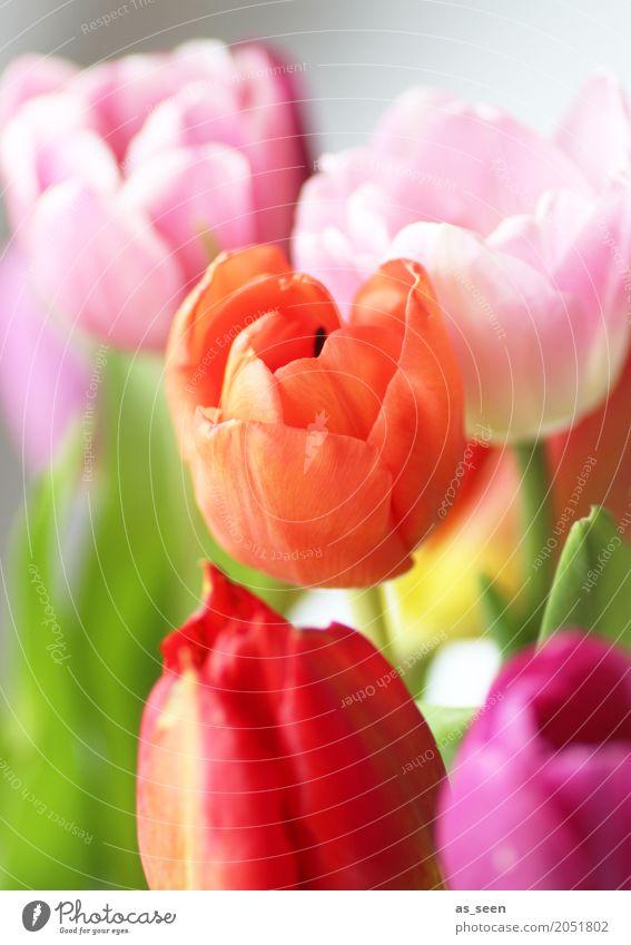 Spring meets summer Lifestyle Stil Design exotisch Leben harmonisch Garten Feste & Feiern Valentinstag Muttertag Natur Frühling Sommer Blume Tulpe Blatt Blüte