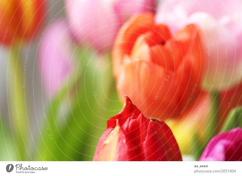 Flower colours Lifestyle Design exotisch Freude Wellness Leben harmonisch Sinnesorgane Valentinstag Muttertag Ostern Geburtstag Natur Frühling Sommer Pflanze