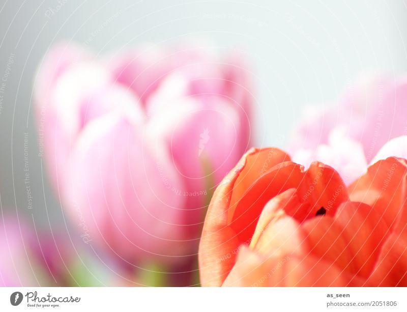 Pink meets orange Lifestyle Stil Design exotisch Freude Kosmetik Wellness Leben harmonisch Dekoration & Verzierung Feste & Feiern Valentinstag Muttertag Ostern