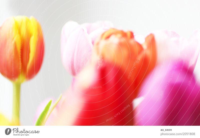 Blooming Natur Pflanze Sommer Farbe Blume rot Leben Lifestyle Blüte Frühling Innenarchitektur Garten Design rosa modern Dekoration & Verzierung