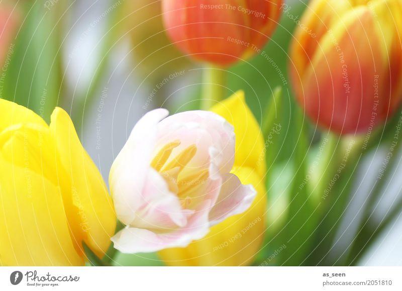 Blumenstrauss Lifestyle Wellness Leben harmonisch Feste & Feiern Muttertag Ostern Geburtstag Natur Frühling Sommer Tulpe Blatt Blüte Garten Park Blumenstrauß