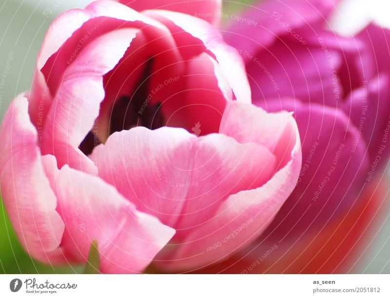Pink power Lifestyle Stil Design exotisch Kosmetik Wellness Leben harmonisch Sinnesorgane Duft Muttertag Ostern Geburtstag Natur Frühling Sommer Pflanze Blume