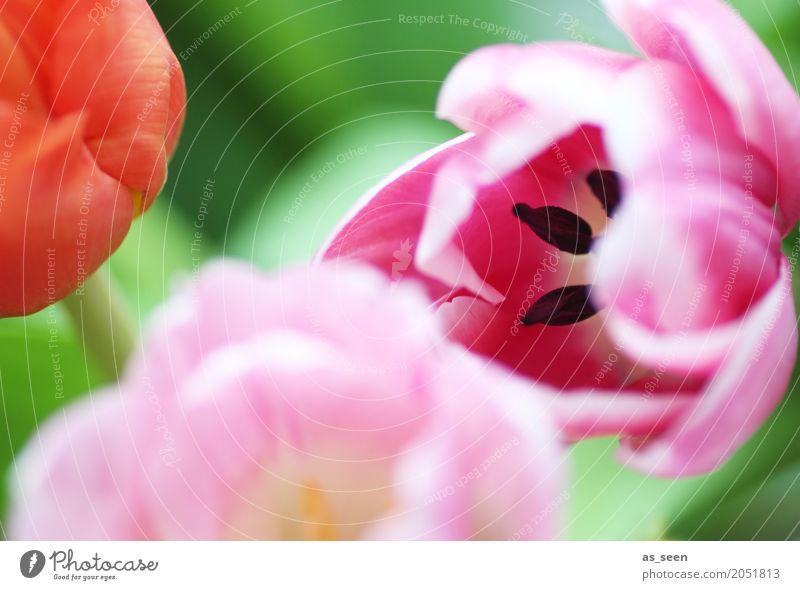 Summer in pink Lifestyle Wellness Leben harmonisch Valentinstag Muttertag Ostern Geburtstag Natur Pflanze Frühling Sommer Blume Tulpe Blatt Blüte Blumenstrauß