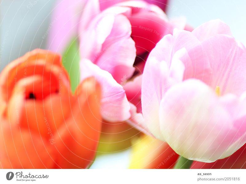 Summer colours Natur Pflanze Sommer Farbe Blume Freude Leben Lifestyle Blüte Frühling Bewegung Garten orange Design rosa hell