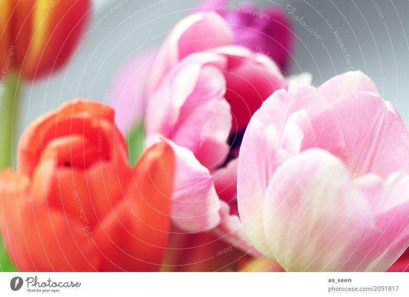 Colours Natur Pflanze Sommer Farbe Blume rot Lifestyle Blüte Frühling Bewegung Stil Garten Design rosa modern Dekoration & Verzierung