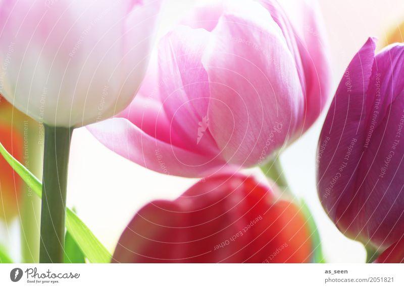 Farbenmix Natur Pflanze Sommer schön grün Blatt Leben Lifestyle Blüte Frühling Stil Garten Design rosa Wachstum