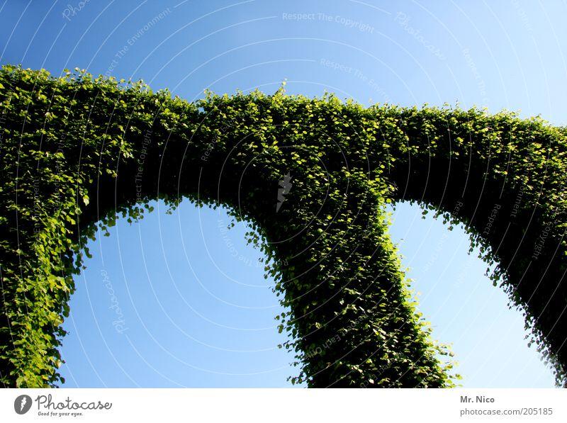 m Natur grün Pflanze Garten Park Umwelt Wachstum Symbole & Metaphern Gartenbau Torbogen Efeu himmelblau Naturwuchs Schlosspark Landschaftsarchitektur
