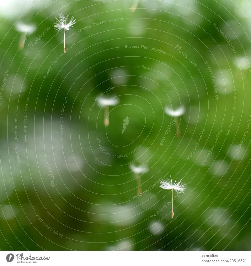 Flugschule Natur Erholung ruhig Hintergrundbild Gesundheit fliegen Zufriedenheit Wellness Wohlgefühl Gelassenheit Meditation Samen Löwenzahn Sinnesorgane Kur