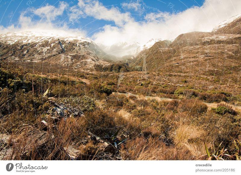 New Zealand 129 Natur schön Pflanze Schnee Berge u. Gebirge Landschaft Umwelt Gras Sträucher Urelemente einzigartig außergewöhnlich Alpen Reisefotografie Gipfel