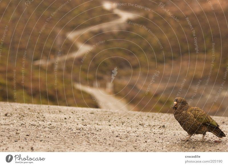 New Zealand 130 Natur Wasser Tier Umwelt Landschaft dunkel Straße Berge u. Gebirge Wege & Pfade Vogel Felsen außergewöhnlich Verkehr Alpen Hügel Urwald